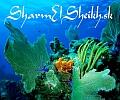 Sharmelsheikh.sk - Dovolenkový bedeker o Egypte, destinácii Sharm El Sheikh!